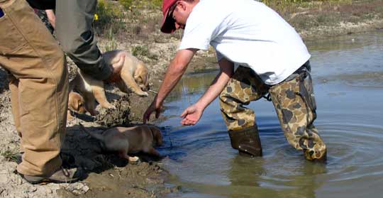 Puppy Introduction to Water