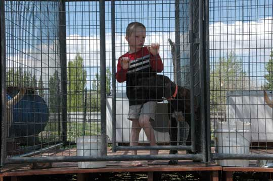 Canine Socialization kids and dogs