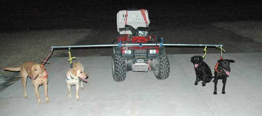 Roading Dogs for exercise