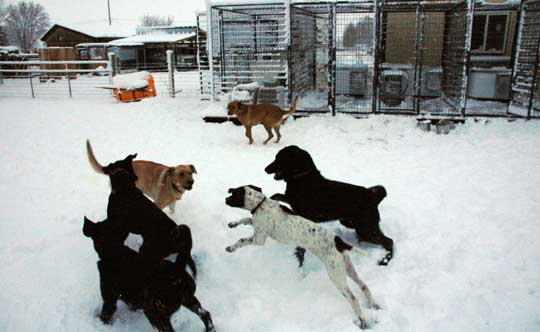Our pack of snow dogs - Winter time training