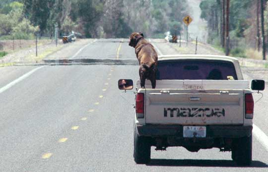 Anyone Use A Dog Tether System In Their Pickup Truck Bed